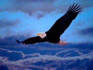 un aigle en vol