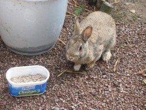 Un lapin dans mon jardin